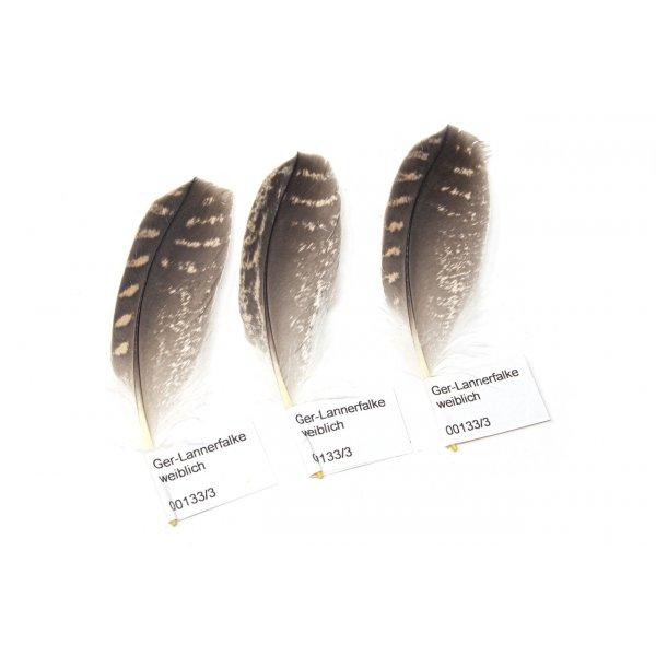 Federn-Set vom Ger-Lannerfalken - Schwungfedern - 00133-3