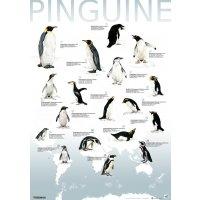 Artenplakat - Pinguine - A2 - laminiert