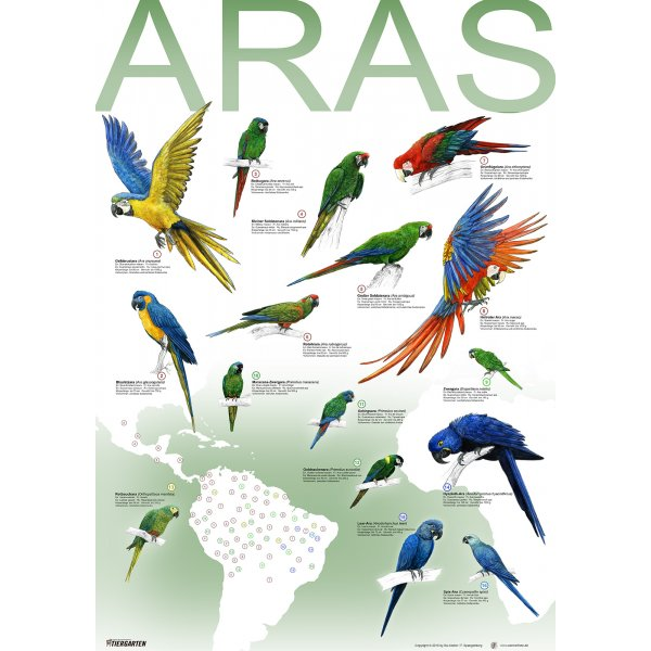 Artenplakat - Aras - A2 - laminiert
