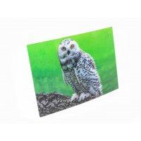 3D Postkarte Schnee-Eule