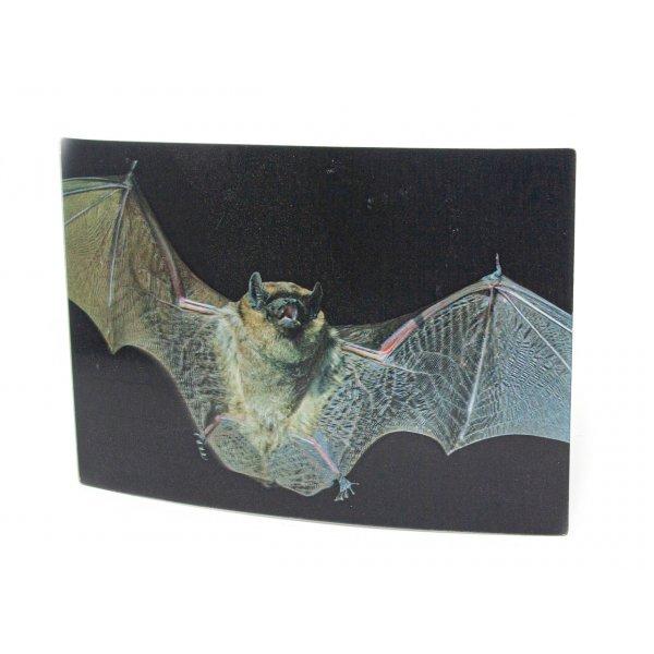 3D Postkarte Fledermaus
